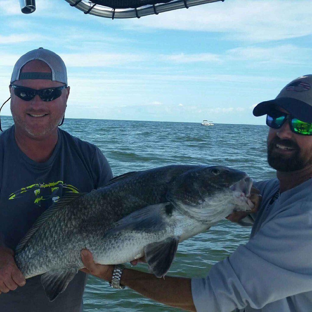 Daytona Beach Inshore Fishing Black Drum